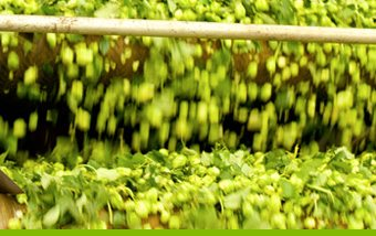 Life of a Hop - Sorting