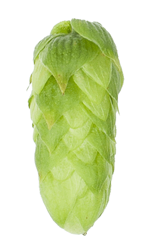 Hallertau blanc single hop So Many New Hops, Craft Beer & Brewing