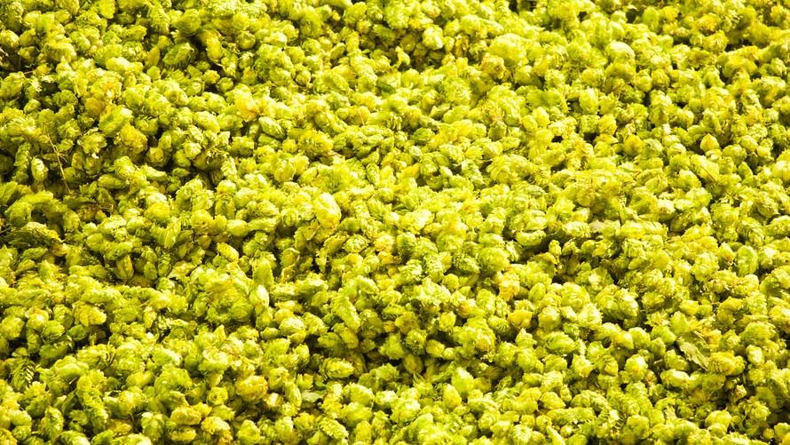Batch of hops